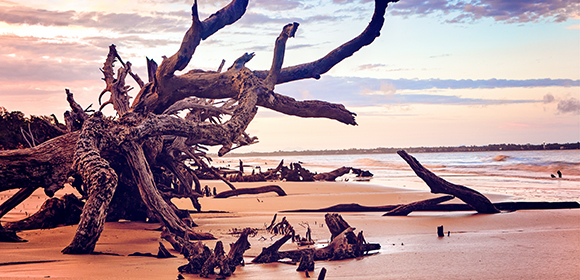 jekyll island driftwood on beach